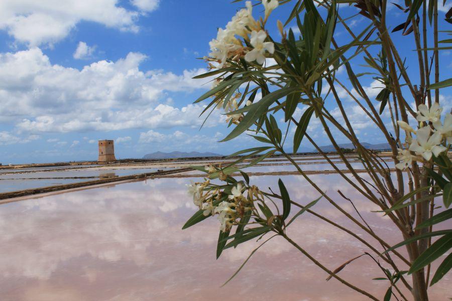 Saliny w Trapani, Lato saliny w Trapani, Saliny latem, Trapani, Sycylia, Saline di Nubia, Saliny w Nubii, Kwiaty na Nubii