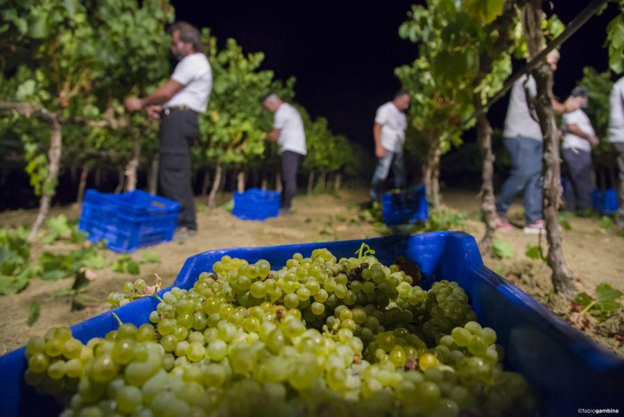 Donnafugata, Marsala, calici di stelle, Donnafugata, rodzina Rallo, Rallo, Contessa Entellina, Panele słoneczne, ochrona środowiska, Marsala, Sycylia, Wino, Wino Sycylia, Wino Marsala, Trapani, wina sycylijskie, sycylijskie wina, wina z Sycylii, Khamma, Pantelleria, metoda alberello, zibibbo, passito di pantelleria, moscato di pantelleria, zibibbo, Nero-d'Avola, Vittoria, Etna, bell'assai, wizyta w Donnafugata, degustacja wina w Marsali, degustacja wina Marsala, piwnica winna, piwnica, wino w beczkach, beczki z winem, cantine aperte, drzwi otwarte w Donnafugata