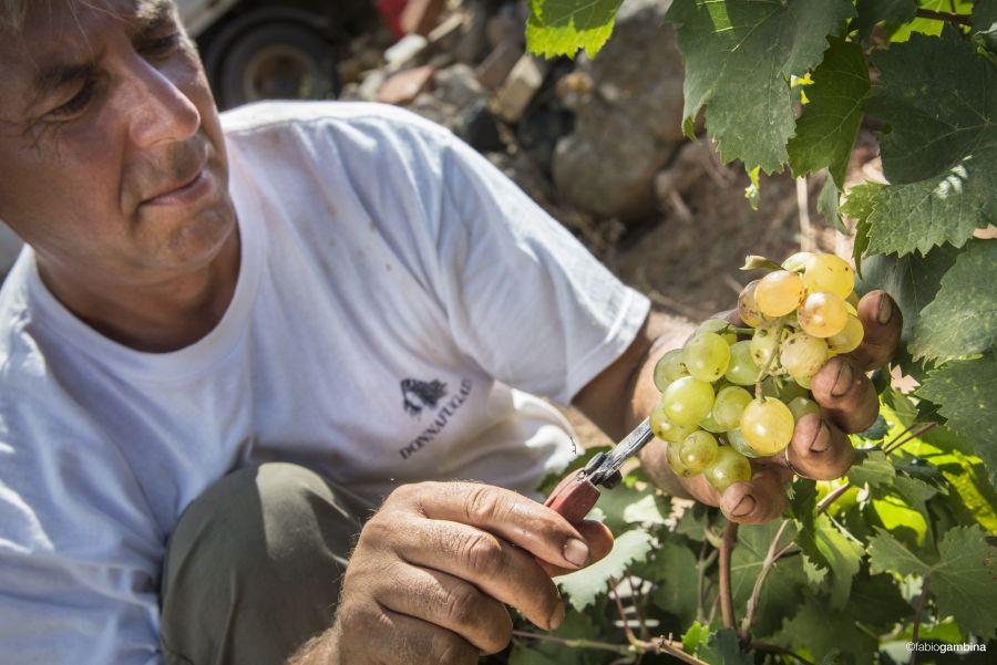 Donnafugata, Marsala, Donnafugata, rodzina Rallo, Rallo, Contessa Entellina, Panele słoneczne, ochrona środowiska, Marsala, Sycylia, Wino, Wino Sycylia, Wino Marsala, Trapani, wina sycylijskie, sycylijskie wina, wina z Sycylii, Khamma, Pantelleria, metoda alberello, zibibbo, passito di pantelleria, moscato di pantelleria, zibibbo,