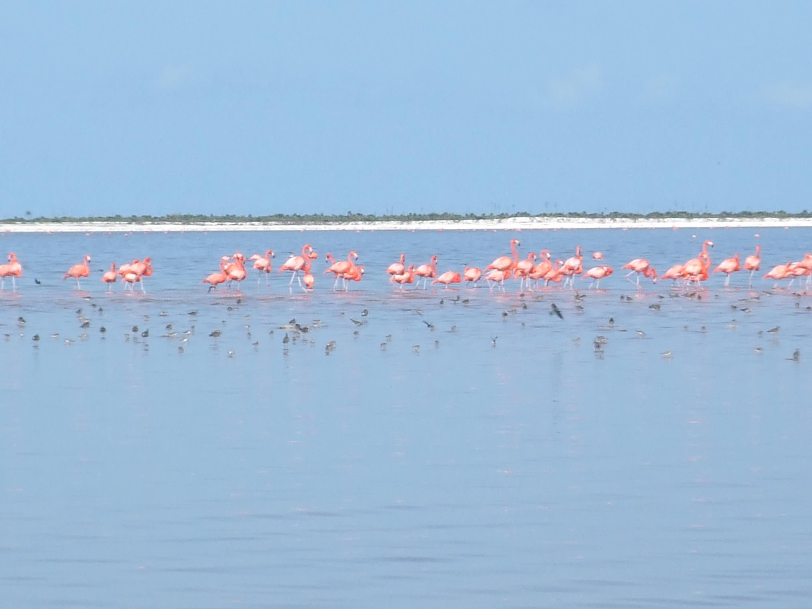 Saliny w Trapani, Różowe flamingi, Trapani, Sycylia, Rezerwat WWF Trapani, Flamingi, Saliny w Nubii, Saline di Nubia, Saline di Trapani, Sól morska